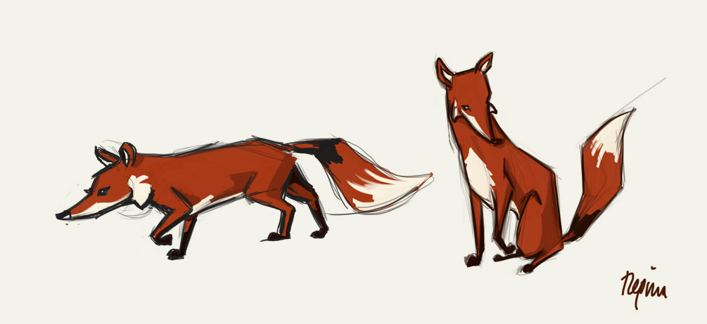 fox sketches